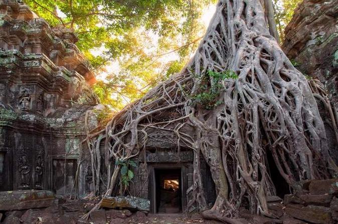 Cambodian Sights - Ta Prohm - fun things to do in cambodia