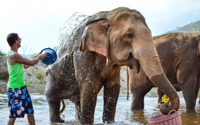 Volunteering at the Elephant Nature Park in Chiang Mai, Thailand