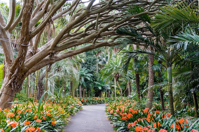 Royal Botanic Gardens - 24 Hour Guide to Sydney