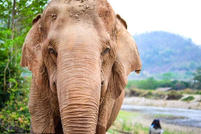 Responsible travel in Thailand: Elephant Nature Park
