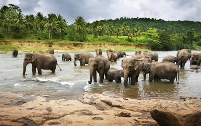 Elephant Sanctuary Tour