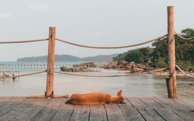 National Day of Unplugging with Mad Monkey in Cambodia