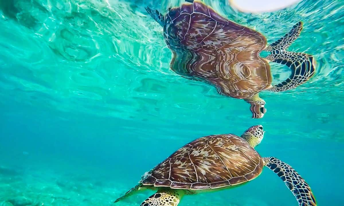 Gili Trawangan sea turtles