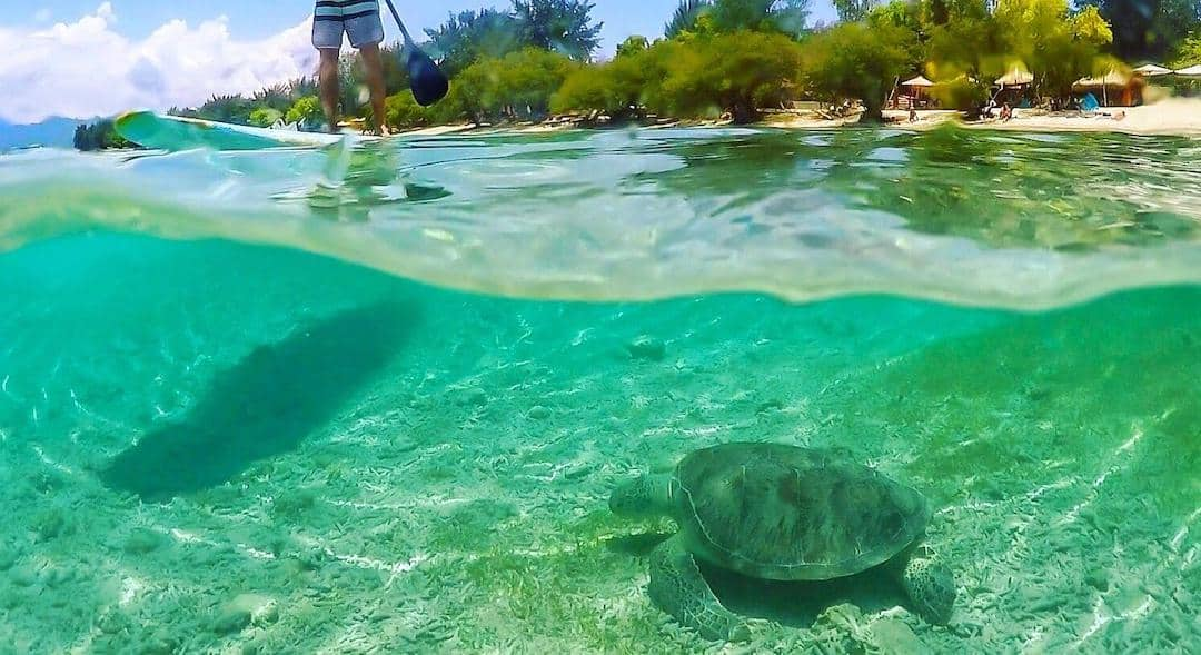 Gili Trawangan Snorkeling with Sea Turtles Guide